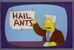 hail-ants-thumb-250x170