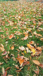 fall in boise
