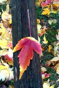 Fall Leaves - Literary fall quotes